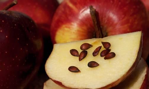 semillas-de-manzana