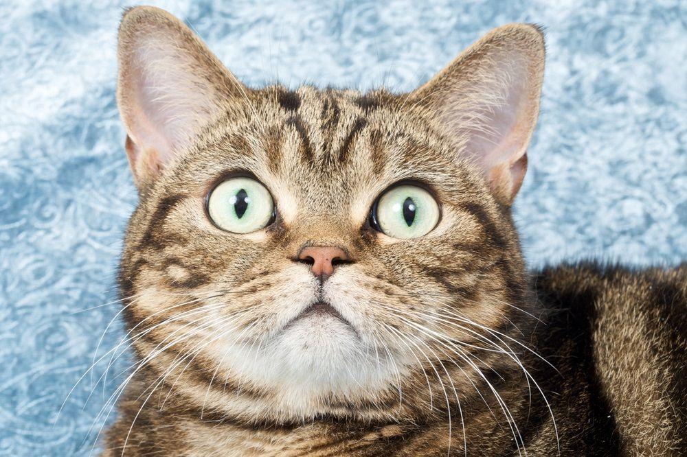 6 misterios de los bigotes del gato que necesita conocer | Tu ...